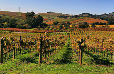 One-Hotel Stay Featuring California's Fabled Wine Country