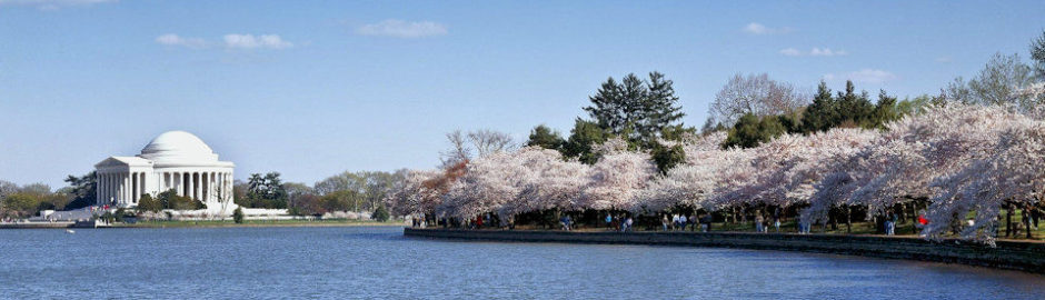 DC Cherry Blossoms Guided Vacation